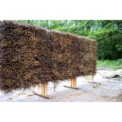 Schwarzdornbündel Schlehdorn